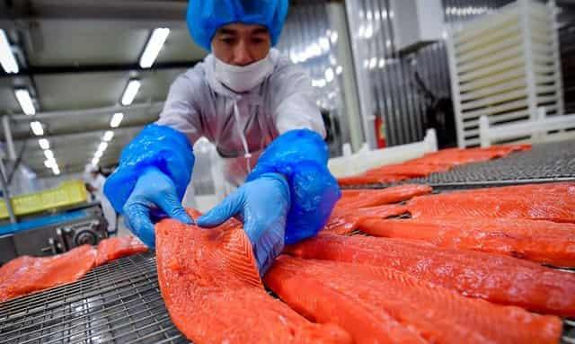Работа на рыбном заводе на Камчатке