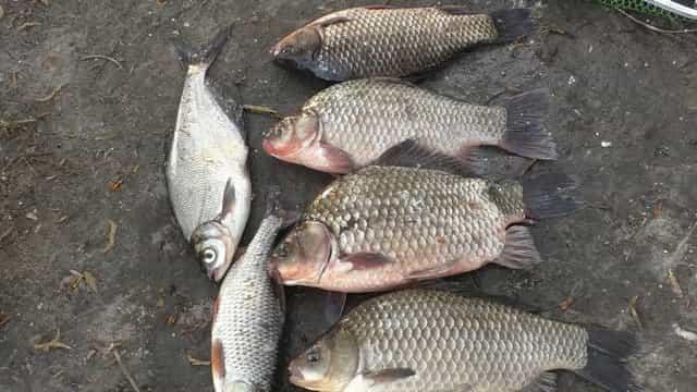 Ловля рыбы на активатор