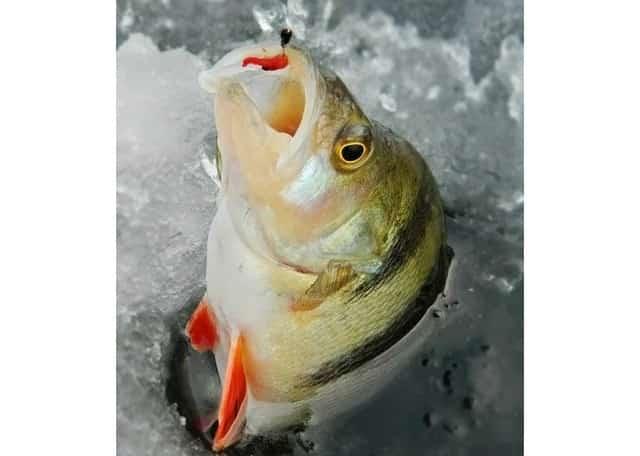 Ловля рыбы зимой на сапожок