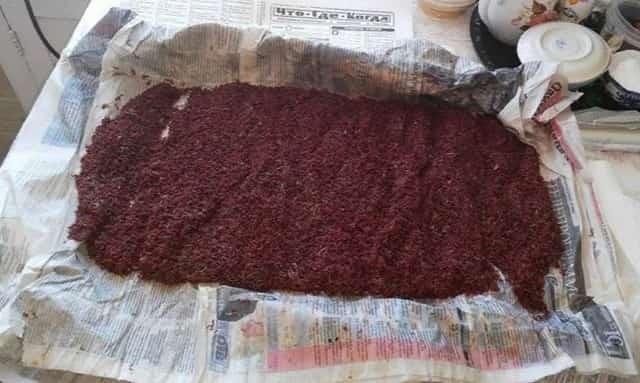 Долгоиграющая зимняя прикормка из мотыля